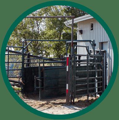 Herd Health Img