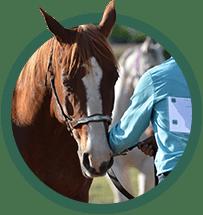 Equine Img